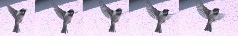 slow-motion of flying bird